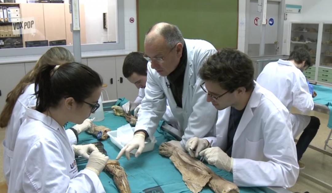 L'Humusation est-elle compatible avec le don du corps à la science, l'embaumement et le legs d'organes post-mortem ?