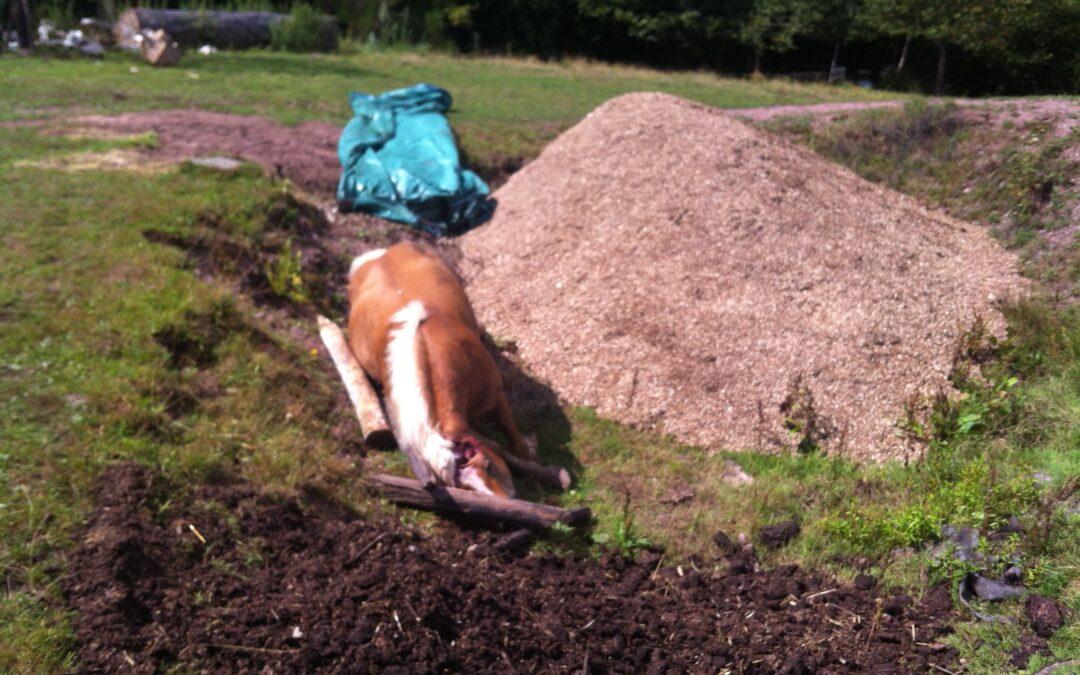 Je viens de perdre mon animal de compagnie (perroquet, chien, chat, cheval, …) comment lui faire bénéficier de ce traitement de faveur ?